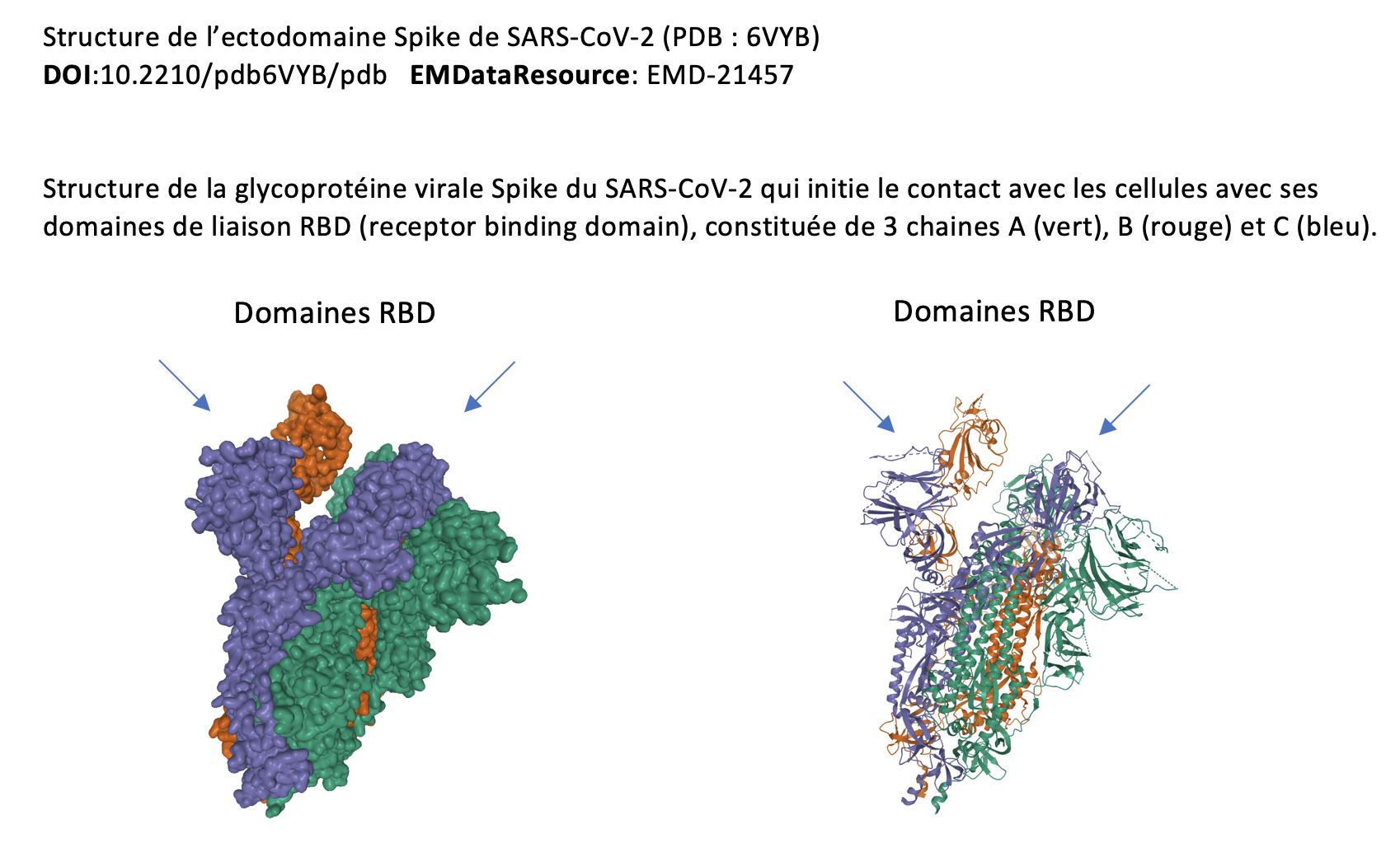 virus sars cov 2